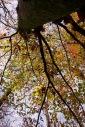 Forêt d'Allogny