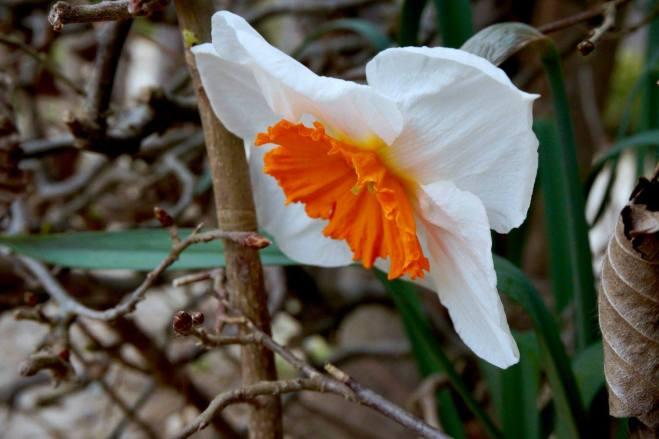CarnetsdeMarine_Photodujour_Flower